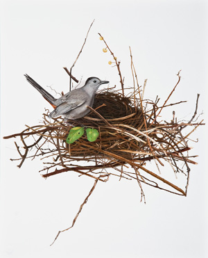 Catbird Building Nest